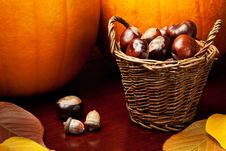 Free Autumn Still Life Royalty Free Stock Photos - 17790748