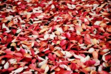 Free Autumn Carpet Stock Image - 17790801