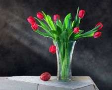 Free Spring Tulips Stock Photography - 17791232