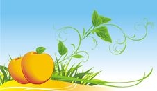 Free Two Yellow Apples Among Grass Stock Photo - 17791670