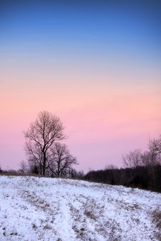 Free Trees In Winter Time Royalty Free Stock Photo - 17791755