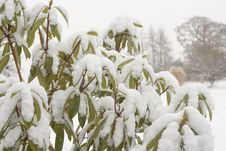 Free Winter Landscape  In Snow Royalty Free Stock Photography - 17791957