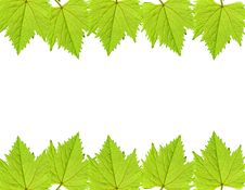 Free Green Grape Leaf Frame Royalty Free Stock Image - 17792056