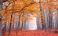 Free Beautiful Autumn Scene Royalty Free Stock Photography - 17792137