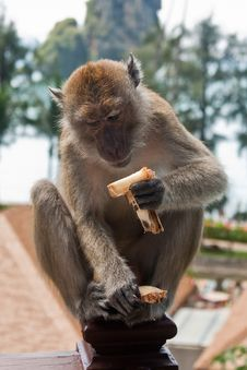 Free Monkey Sat On Hotel Balcony Eating Stock Photography - 17792852