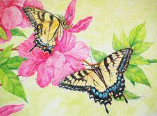 Free Tiger Swallowtails Illustration Stock Photo - 17793890