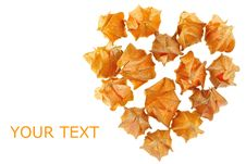 Free Physalis In Heart Shape Royalty Free Stock Images - 17793969