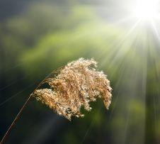 Meadow Grass And Sun Royalty Free Stock Photography