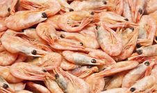 Free Shrimp Royalty Free Stock Photography - 17796727