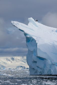 Free Iceberg Bird Stock Images - 17796784