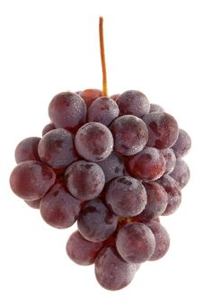 Free Bunch Of Grapes In The Dew Stock Photography - 17798452