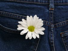 Flower In Pocket Royalty Free Stock Images
