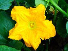 Free Yellow Flower Stock Image - 1781371