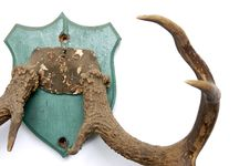 Free Antlers On White Royalty Free Stock Photos - 1781998
