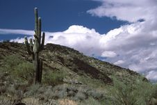 Free Saguaro Cactus And Clouds Royalty Free Stock Photo - 1782935