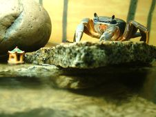 African Moon Crab On Ledge Stock Photo
