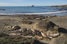 Elephant Seal Rookery Royalty Free Stock Photography