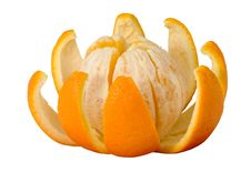 Free Orange Royalty Free Stock Photography - 1785917