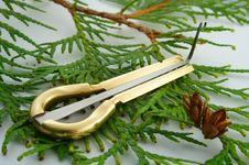 Free Jew S Harp Royalty Free Stock Photos - 1786358