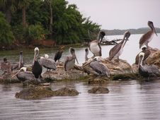 Free Pelican Rock Stock Photography - 1786442