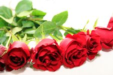 Close Up Of Red Roses Stock Images