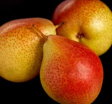 Free Three Pears Stock Photo - 1788300