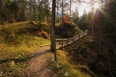 Magic Forest In Autumn Stock Photography