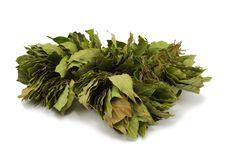 Free The Big Sheaf Of A Bay Leaf Stock Image - 17801731