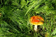 Free Mushroom It Is Time In Siberia Royalty Free Stock Images - 17801959