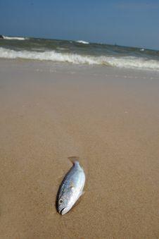 Free Fish Royalty Free Stock Image - 17802826