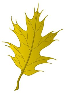 Free Leaf Of An Autumn Oak Iberian Royalty Free Stock Photography - 17804897