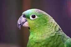 Green Cockatiel Head Royalty Free Stock Photography
