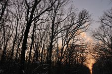 Free Winter Forest At Sunset Royalty Free Stock Photos - 17806828