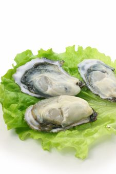 Free Oyster Stock Photography - 17807232