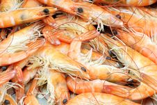 Free Cooked Shrimp Royalty Free Stock Photo - 17807545