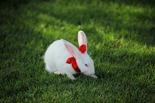 Free White Rabbit Stock Photo - 17808780