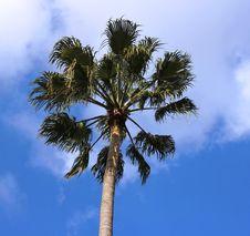 Free Palm Tree Stock Image - 17809111