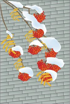Free Rowanberry On Brick Background Royalty Free Stock Images - 17809359