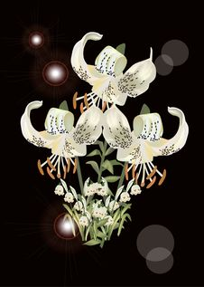 Free Light Lily Flowers On Black Illustration Stock Photography - 17809362