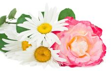 Free Roses And Daisies Stock Photos - 17809493