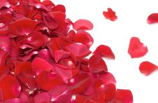Free Red Rose Petals On White Stock Image - 17809651