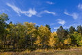 Free Wisping Aspens And Blue Skies Stock Photos - 17817943