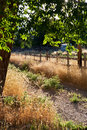 Free Country Lane In Summer Royalty Free Stock Photos - 17819658