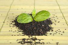 Free Tea Royalty Free Stock Image - 17811266