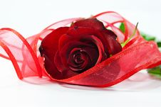 Free Red Rose With Ribbon Stock Photo - 17811940