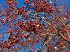 Free Red Berries Stock Image - 17812201
