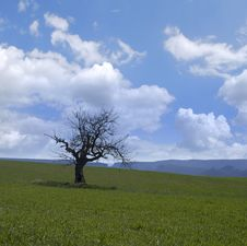 Free Green Fields Stock Photo - 17813590