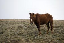Free Horse Stock Image - 17813591