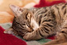 Striped Kitten Sleeps Royalty Free Stock Photos