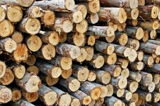 Free Pile Of Wood In Logs Storage Royalty Free Stock Photo - 17814665